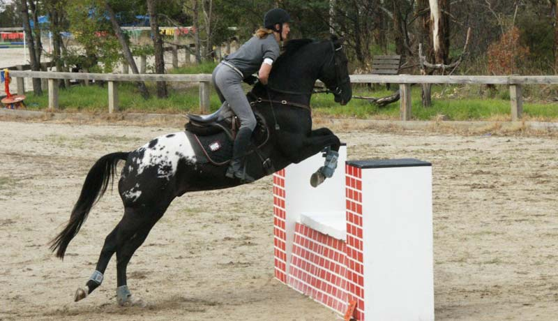 Sportaloosa International - the great value registry for spotted sport horses