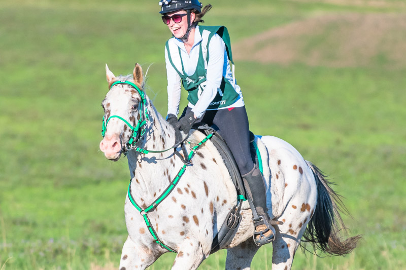 2019 Sportaloosa stallion showcase