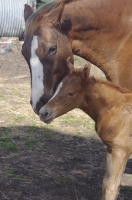Kerrinna filly